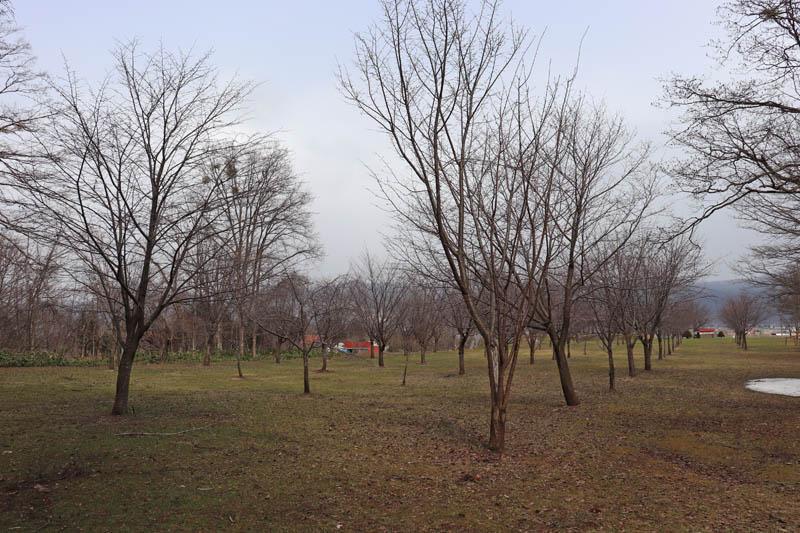 山部の桜の名所