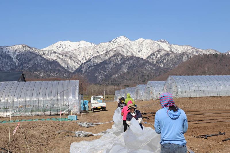 芦別岳を見ながらの作業