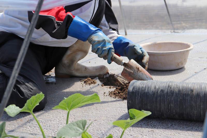 メロンを植える場所に穴を掘る